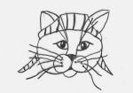 Blog7-cat