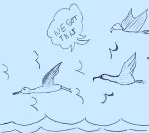 Blog18-Birds